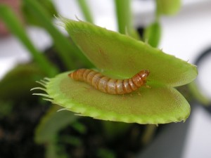 how to care for houseplants feeding