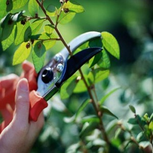 how to care for houseplants pruning