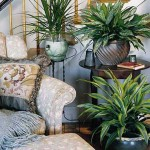 Plants for Hall or Staircase
