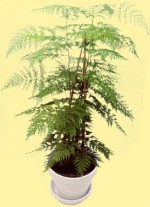 Pruning and Training House Plants