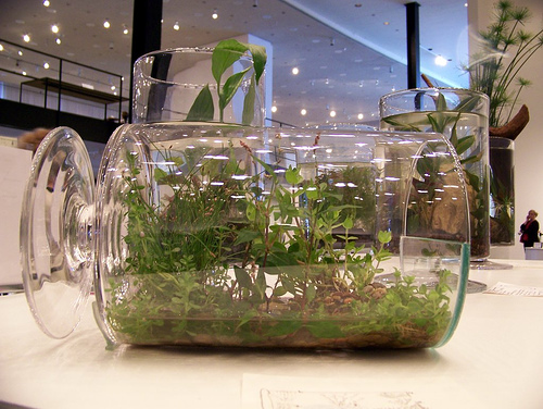 Gardening In Bottle : Growing House Plants in a Bottle Garden