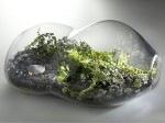 Wardian Cases and Terrariums