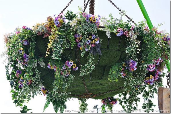 Arranging-plants-in-a-hanging-basket