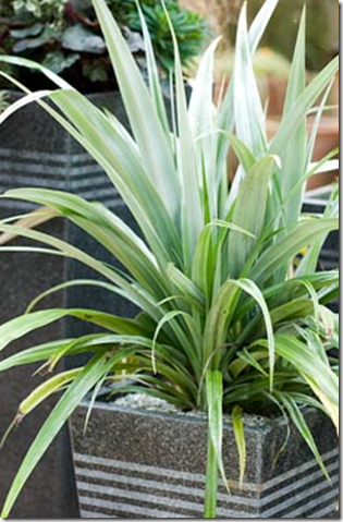 Shade Plants For Window Boxes