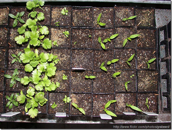 Seedlings-in-compost