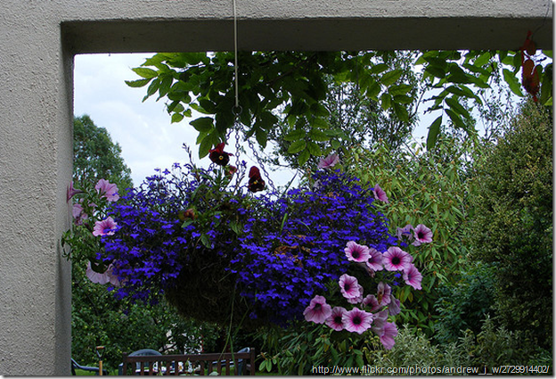 arranging-a-hanging-basket