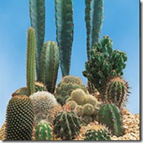 cacti-grown-from-seed