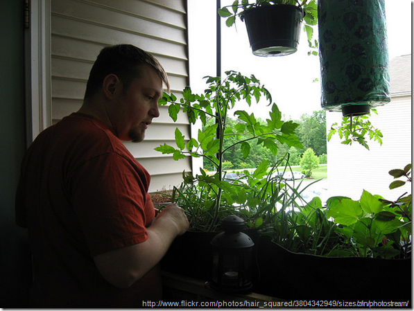 Planting Herbs in Containers
