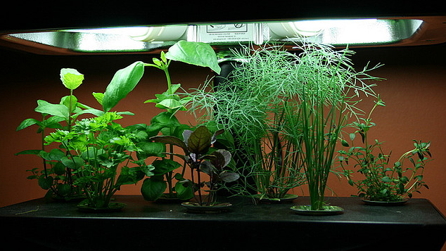 Hydroponics Cultivating Without Soil