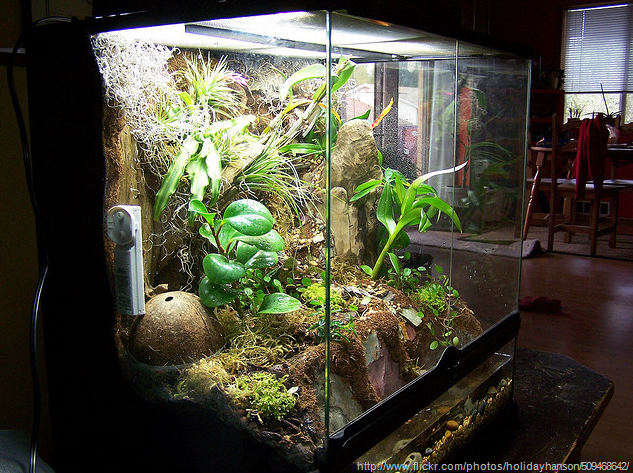 Large Glass Terrariums Submited Images