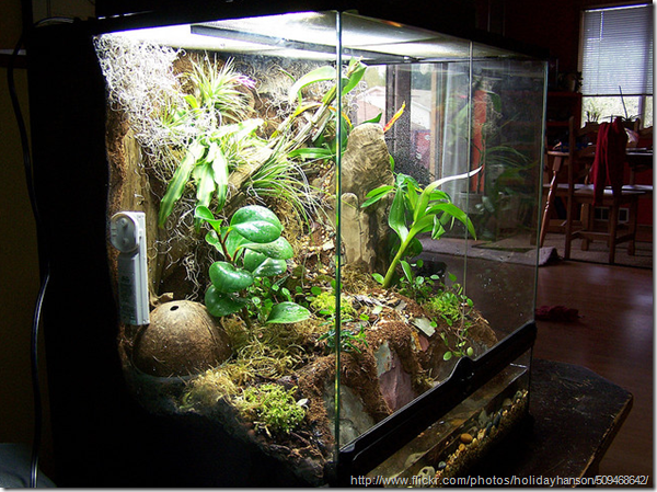 Planting Terrariums and Wardian cases