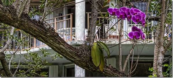 orchids-are-epiphytes