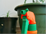 Controlling Humidity For Optimum Houseplant Growth