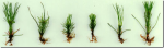 New Plants from Plantlets