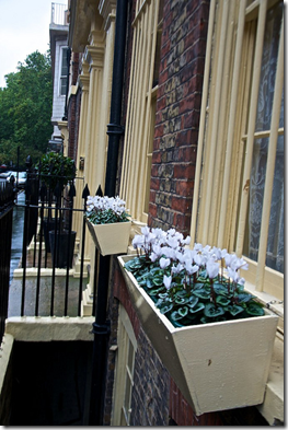 wooden-window-boxes