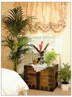 Best Plants For A Bedroom