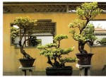 Displaying Bonsai