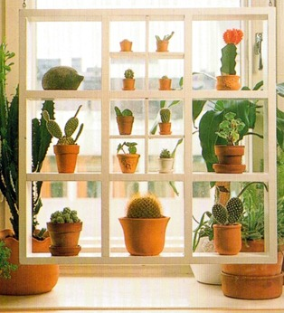 Displaying Plants on Shelves 2