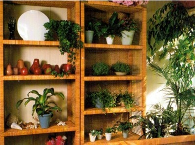 Displaying Plants on Shelves