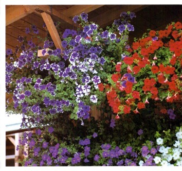 Effects with Hanging Baskets