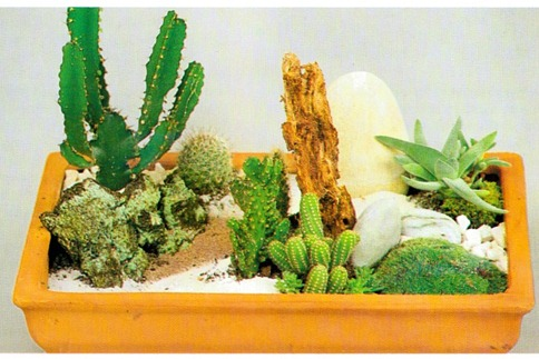 Grouping Cacti2