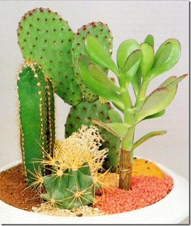 Different types of cactus houseplants popular house plans and design ideas - Home plants types ...