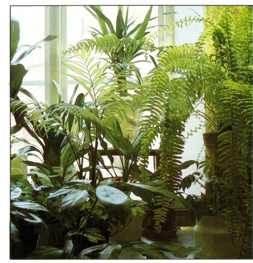 Growing plants at a north facing window - Houseplants thrive low light youre window sill ...