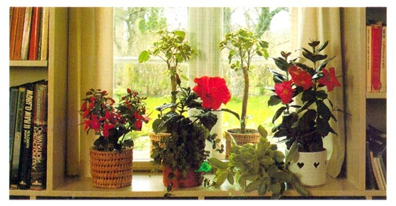 Growing Plants At A West-facing Window
