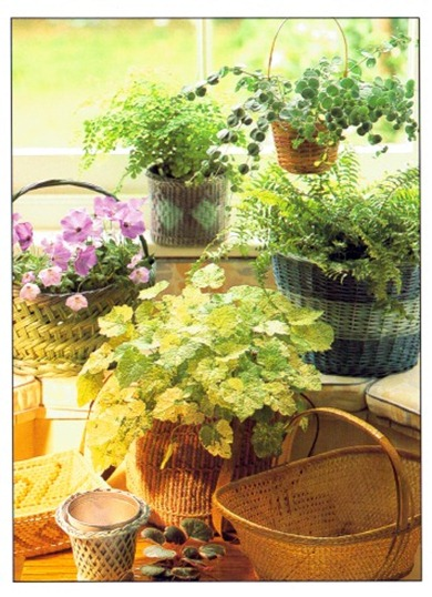 House Plant Containers From Baskets