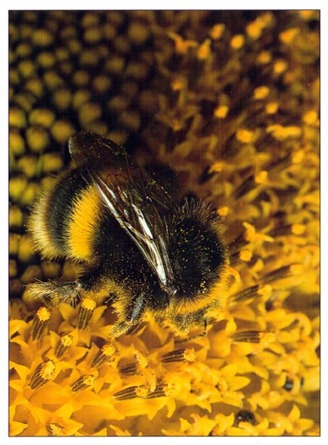 How Pollination Works