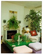 Indoor Plant Decorations for Coffee and Dining Tables