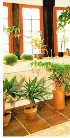 Indoor Plant Displays and Central Heating