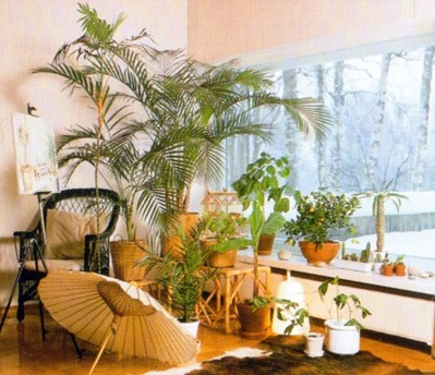 Indoor Plants For A South-facing Window