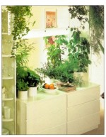 Indoor Plants for Dividers and Screens
