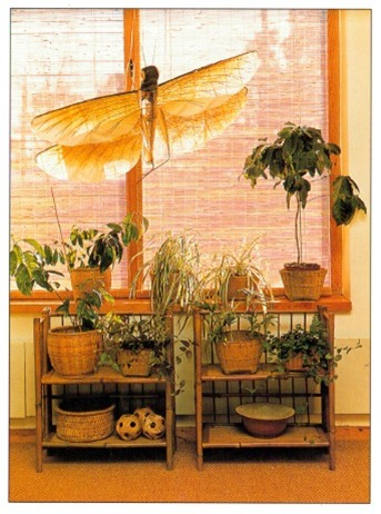 Japanese Style House Plants
