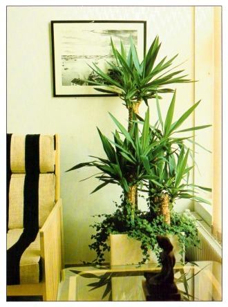 And Tall Indoor Plants