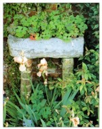 Outdoor Container Gardens