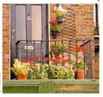 Plants To Grow Around The Front Door