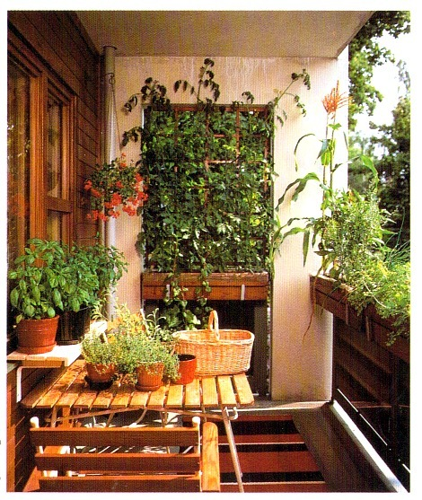 Plants to grow on balconies for Plants for apartment balcony