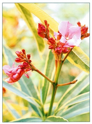 Poisonous Plants To Be Careful Of In The Home