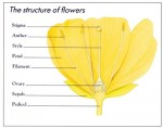 The Function of Flowers