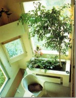 Tips on Creating an Indoor Garden