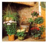 Using Fireplaces To Display House Plants