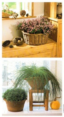 country style rustic houseplant arrangments