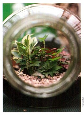 growing plants in glass containers 2