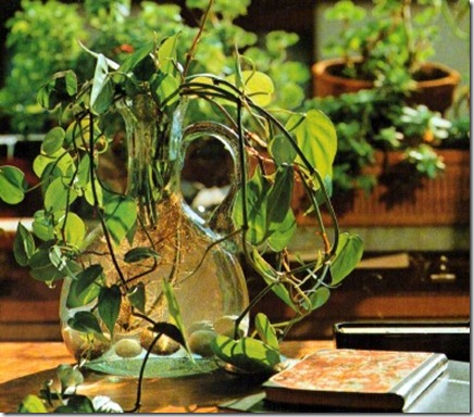 growing plants in glass containers
