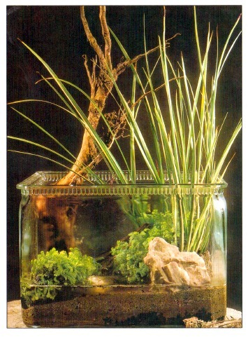 Setting up indoor water gardens workwithnaturefo