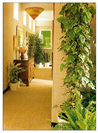 House Plants In The Hallway