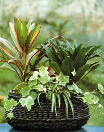 Single Container Arrangements Of Plants