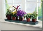 Mistakes Made Positioning Plants – Where Do You Expect Your House Plants To Live?